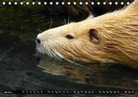 Possierliche Nutrias (Tischkalender 2019 DIN A5 quer) - Produktdetailbild 7
