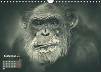 PRIMATEN PORTRAITS - monochrom (Wandkalender 2019 DIN A4 quer) - Produktdetailbild 9