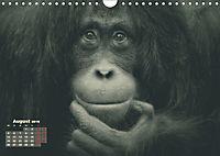 PRIMATEN PORTRAITS - monochrom (Wandkalender 2019 DIN A4 quer) - Produktdetailbild 8