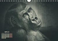 PRIMATEN PORTRAITS - monochrom (Wandkalender 2019 DIN A4 quer) - Produktdetailbild 7