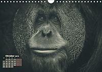 PRIMATEN PORTRAITS - monochrom (Wandkalender 2019 DIN A4 quer) - Produktdetailbild 10