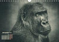 PRIMATEN PORTRAITS - monochrom (Wandkalender 2019 DIN A4 quer) - Produktdetailbild 11