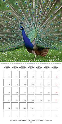 Proud Peacock (Wall Calendar 2019 300 × 300 mm Square) - Produktdetailbild 10