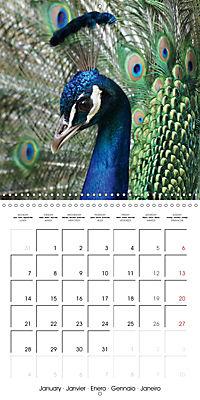 Proud Peacock (Wall Calendar 2019 300 × 300 mm Square) - Produktdetailbild 1