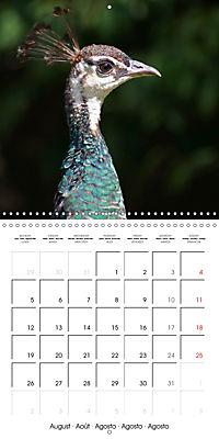Proud Peacock (Wall Calendar 2019 300 × 300 mm Square) - Produktdetailbild 8
