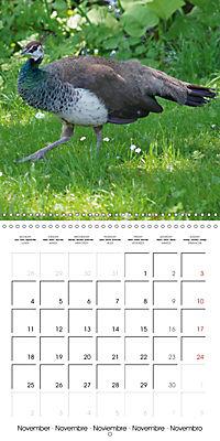 Proud Peacock (Wall Calendar 2019 300 × 300 mm Square) - Produktdetailbild 11