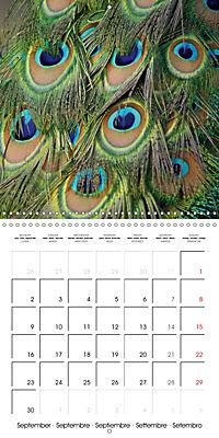 Proud Peacock (Wall Calendar 2019 300 × 300 mm Square) - Produktdetailbild 9