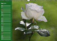 Proud Roses (Wall Calendar 2019 DIN A3 Landscape) - Produktdetailbild 5