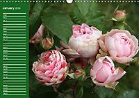 Proud Roses (Wall Calendar 2019 DIN A3 Landscape) - Produktdetailbild 1