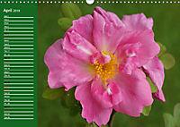 Proud Roses (Wall Calendar 2019 DIN A3 Landscape) - Produktdetailbild 4