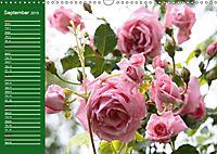 Proud Roses (Wall Calendar 2019 DIN A3 Landscape) - Produktdetailbild 9