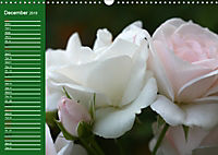 Proud Roses (Wall Calendar 2019 DIN A3 Landscape) - Produktdetailbild 12