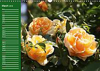 Proud Roses (Wall Calendar 2019 DIN A3 Landscape) - Produktdetailbild 3