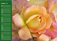 Proud Roses (Wall Calendar 2019 DIN A3 Landscape) - Produktdetailbild 8