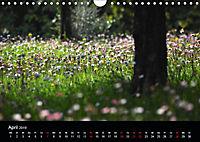 Provence 2019 - Stille Bilder (Wandkalender 2019 DIN A4 quer) - Produktdetailbild 4