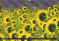 Provence (Wandkalender 2019 DIN A2 quer) - Produktdetailbild 9