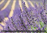 Provence (Wandkalender 2019 DIN A2 quer) - Produktdetailbild 8