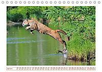 Puma: Auf leisen Pfoten (Tischkalender 2019 DIN A5 quer) - Produktdetailbild 4