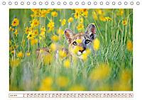 Puma: Auf leisen Pfoten (Tischkalender 2019 DIN A5 quer) - Produktdetailbild 6