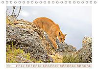 Puma: Auf leisen Pfoten (Tischkalender 2019 DIN A5 quer) - Produktdetailbild 5