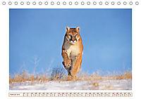 Puma: Auf leisen Pfoten (Tischkalender 2019 DIN A5 quer) - Produktdetailbild 2