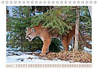 Puma: Auf leisen Pfoten (Tischkalender 2019 DIN A5 quer) - Produktdetailbild 1