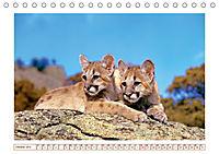 Puma: Auf leisen Pfoten (Tischkalender 2019 DIN A5 quer) - Produktdetailbild 10