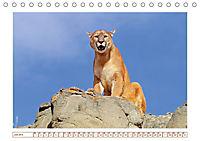 Puma: Auf leisen Pfoten (Tischkalender 2019 DIN A5 quer) - Produktdetailbild 7