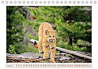 Puma: Auf leisen Pfoten (Tischkalender 2019 DIN A5 quer) - Produktdetailbild 8
