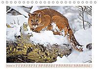 Puma: Auf leisen Pfoten (Tischkalender 2019 DIN A5 quer) - Produktdetailbild 11
