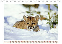 Puma: Auf leisen Pfoten (Tischkalender 2019 DIN A5 quer) - Produktdetailbild 12