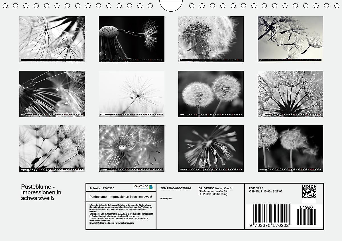 Pusteblume Impressionen In Schwarzweiss Wandkalender 2020 Din A4