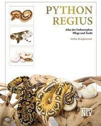 Python regius - Stefan Broghammer |