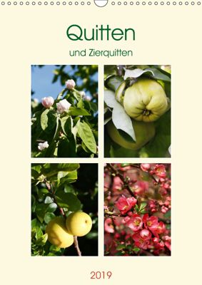 Quitten und Zierquitten (Wandkalender 2019 DIN A3 hoch), Gisela Kruse
