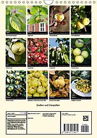 Quitten und Zierquitten (Wandkalender 2019 DIN A4 hoch) - Produktdetailbild 13