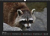Raccoons / UK-Version (Wall Calendar 2019 DIN A3 Landscape) - Produktdetailbild 7