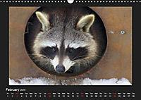 Raccoons / UK-Version (Wall Calendar 2019 DIN A3 Landscape) - Produktdetailbild 2