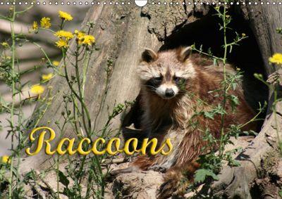 Raccoons / UK-Version (Wall Calendar 2019 DIN A3 Landscape), Antje Lindert-Rottke