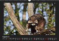 Raccoons / UK-Version (Wall Calendar 2019 DIN A3 Landscape) - Produktdetailbild 8