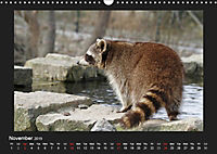 Raccoons / UK-Version (Wall Calendar 2019 DIN A3 Landscape) - Produktdetailbild 11