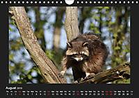Raccoons / UK-Version (Wall Calendar 2019 DIN A4 Landscape) - Produktdetailbild 8