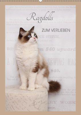 Ragdolls zum Verlieben (Wandkalender 2019 DIN A2 hoch), Marion Reiß-Seibert