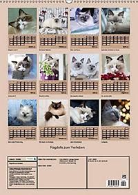 Ragdolls zum Verlieben (Wandkalender 2019 DIN A2 hoch) - Produktdetailbild 13