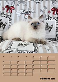 Ragdolls zum Verlieben (Wandkalender 2019 DIN A2 hoch) - Produktdetailbild 2
