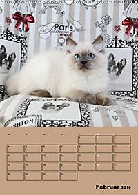 Ragdolls zum Verlieben (Wandkalender 2019 DIN A3 hoch) - Produktdetailbild 2