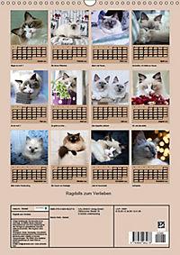 Ragdolls zum Verlieben (Wandkalender 2019 DIN A3 hoch) - Produktdetailbild 13