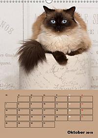 Ragdolls zum Verlieben (Wandkalender 2019 DIN A3 hoch) - Produktdetailbild 10