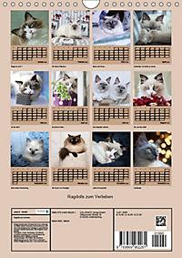 Ragdolls zum Verlieben (Wandkalender 2019 DIN A4 hoch) - Produktdetailbild 13