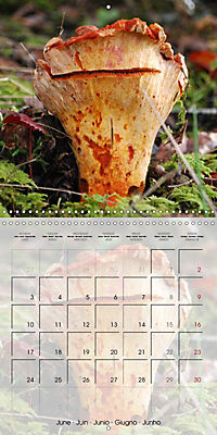Rainforest Mushrooms (Wall Calendar 2019 300 × 300 mm Square) - Produktdetailbild 6
