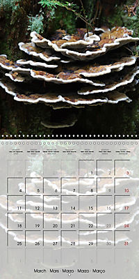 Rainforest Mushrooms (Wall Calendar 2019 300 × 300 mm Square) - Produktdetailbild 3
